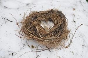 nest photo for blog
