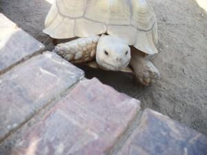 turtoise blog photo smaller size copy 2