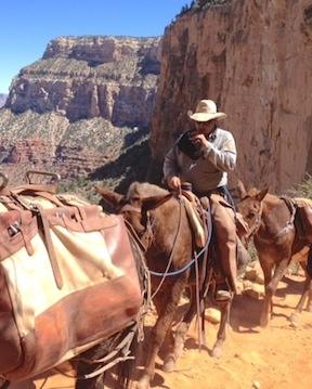 mules 3